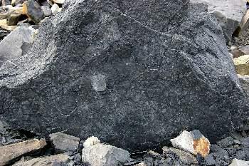 Окаменевшая колония червей весом 1,5 тонны возраст 150 миллионов лет.