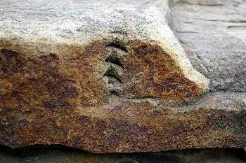Отпечатки древней жизни в песчаннике возратом более двухсот миллионов лет.