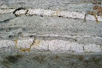Ракушечник в песчаннике возраст 200 миллионов лет.