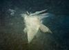 Ледяная Бабочка. Фотография ледяного берега недалеко от Владивостока. Автор - Компанец Д.А.