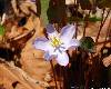 ЛГолубые цветы. Парк Минного городка во Владивостоке. Автор - Компанец Д.А.