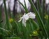 Весенние цветы. Фото флора Владивостока. Автор - Компанец Д.А.