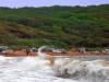Волна. Фотографии острова Русский. Автор - Компанец Д.А.