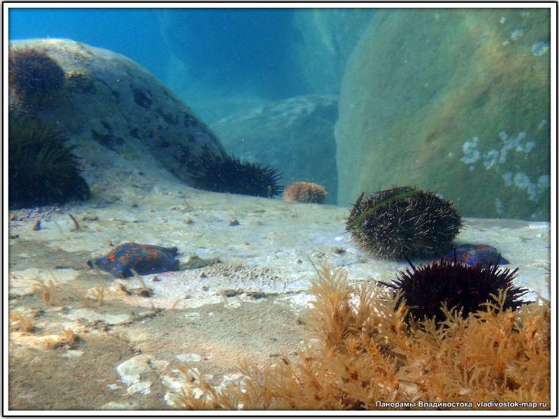 Подводные панорамы.