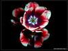 Букет цветов. Фото фризлайт Владивостока. Автор - Компанец Д.А.