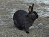 Два зайченка. Автор фотографий - Компанец Д.А.