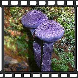 Это может быть вам интересно грибы